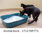 Two Black Cats Going To Reliev...