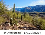 Various Types Of Cactus In...