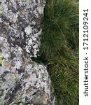 Thickly Growing Grass Along A...