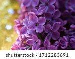 Beautiful Bunch Of Purple Lilac ...
