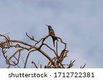 Bird Hummingbird With Beautifu...