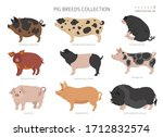 pig breeds collection 7. farm...   Shutterstock .eps vector #1712832574