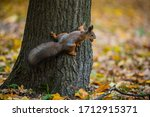 A Squirrel In A Tree Holding A...