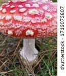 Red Mushroom In Field Of Autum...