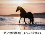 Black Horse Trotting Free At...