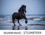 Black Horse Galloping Free At...