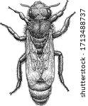 queen bee illustration  drawing ... | Shutterstock .eps vector #1713488737