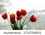 A Bouquet Of Red Tulips On The...