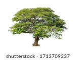 Small photo of Tree isolated on white background for use in architectural design or more.