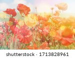 Poppy Flowers Summer Background ...