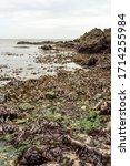 Seaweed At Castle Cove At...