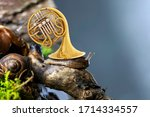 Surreal Scene With Cute Snail...