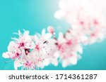 Small photo of Spring border, spring blossom and April floral nature on blue background. Branches of blossoming apricot macro with soft focus. For easter and spring greeting cards with copy space. Springtime.