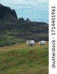 Sheep Photographed Around The...