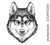 Husky Dog Portrait. Vector...