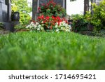 Green Grass And Flowers On A...