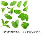 fresh mint leaves isolated on...   Shutterstock . vector #1714993444