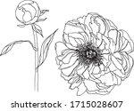 flower peony set outline... | Shutterstock .eps vector #1715028607
