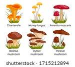 Set Cartoon Mushrooms Vector...