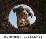 dog peeking into a dirt hole in ... | Shutterstock . vector #1715233411
