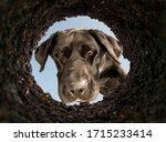 dog peeking into a dirt hole in ...   Shutterstock . vector #1715233414