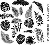 palm leaves set black and white ... | Shutterstock .eps vector #1715265907