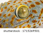 Macro Head Of Gecko Reptile...