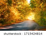 Road To Sun Among Trees With...