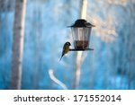 Birds At A Feeder With Peanuts
