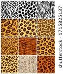 Animal Seamless Pattern Set....