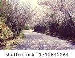 April Cherry Blossom Camellia...