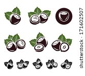 hazelnut nuts set. vector | Shutterstock .eps vector #171602507