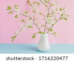 blooming cherry branches in... | Shutterstock . vector #1716220477