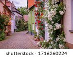 Climbing Roses Near Old Houses...