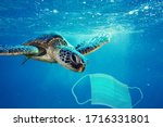 A Sea Turtle Going To Eat A...