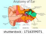 ear anatomy  parts. structure... | Shutterstock .eps vector #1716359071