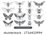 Vector Set Of Different Insects ...