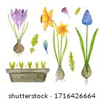 Watercolor Set Of Spring...
