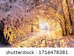 Winter Forest Tree Tunnel Snow...