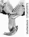 Two African Elephants Twirling...