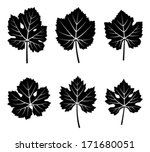 collection of vector grapevine...