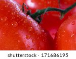 tomatoes in macro photography | Shutterstock . vector #171686195