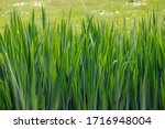 Green Grass Leaves Pattern Wit...