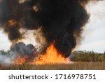 Raging Forest Spring Fires....
