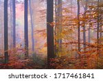 Colorful Tall Beech Trees Close ...