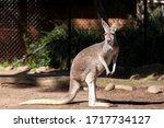 Sydney  Australia   April 2016  ...