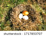 Nest With Golden Egg And White...
