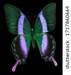 Blue Neon Emperor Butterfly...