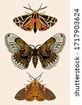set of moths vector... | Shutterstock .eps vector #1717903624