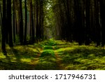 Forest Road In Spring With...